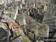 Еврейское кладбище в Кишиневе осквернено