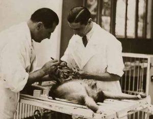 Доктор и его ассистент с обезьяной на операционном столе